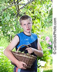 tuin, mand, Tiener, jongen, appeltjes