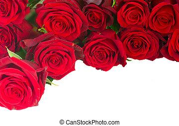 tuin, rozen, karmozijnrood, fris, grens, rood