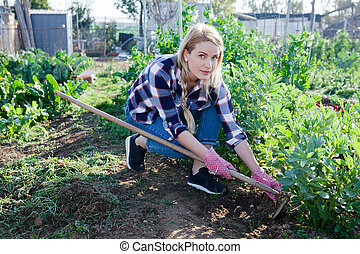 tuin, seedlings, werkende , tuinman, bonen, vrouw, mattock