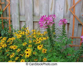 tuin, van, bloemen