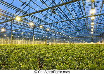 tuinbouw, lelies