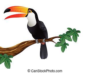 tukan, ptak