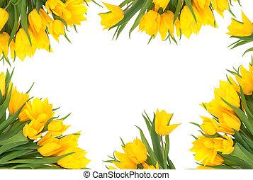 tulipán, flor, frontera