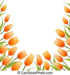 tulipán, flores del resorte, ramo, para, su, tarjeta, design.