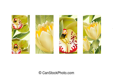 tulipán, flores, orquídea