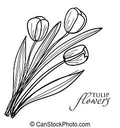 tulipán, flores, sketch.