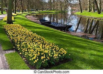 tulipán, jardín, en, keukenhof, países bajos