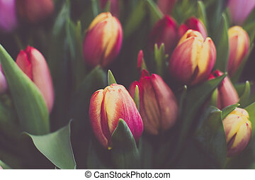tulipán, marco, lleno, ramo