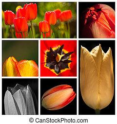 tulipán, montázs