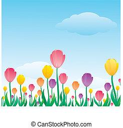 tulipán, patrón