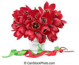tulipán rojo, belleza