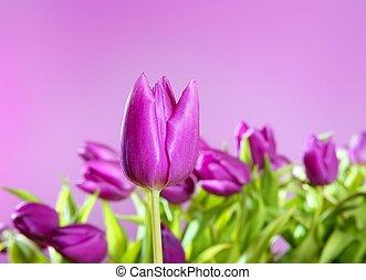 tulipán, vrchol květovat, karafiát, ateliér zastrčit