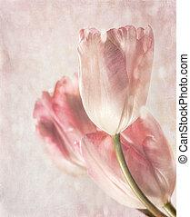 tulipánok, érzés, closeup, szüret