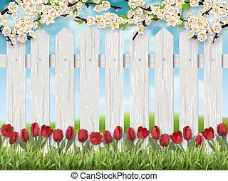 tulipánok, fence., táj, eredet