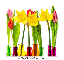 tulip and narcissus flowers in colorful vases