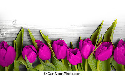 Tulip blooms - Abstract background made of tulip blooms with...