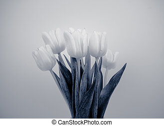 Tulip bouquet in black and white