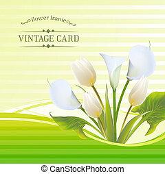 tulip branco, flores mola, buquet, para, sale., vetorial, illustration.
