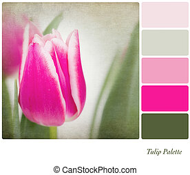 Tulip colour palette - A background tulip flowers in a...