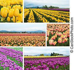Tulip fields collage