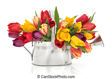 Tulip Flower Beauty - Rainbow coloured tulip flowers in an...