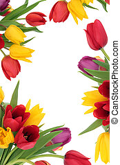 Tulip Flower Border - Tulip flower spring border isolated...