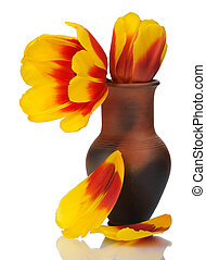 Tulip flower in a pot of red clay, isolated.