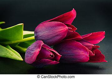 Tulip flower - macro photo