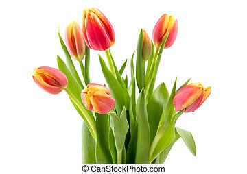 Tulip flowers bouquet for mothers day