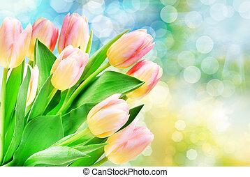 Tulip flowers close up