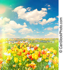 Tulip flowers field over cloudy blue sky on sunny day. Retro sty