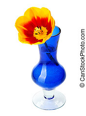 Tulip flowers in a blue glass vase, isolated.