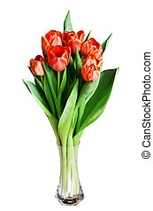 Tulip flowers in a vase