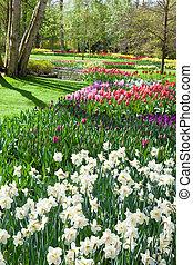 Tulip Garden. Keukenhof. Netherlands