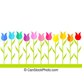 Tulip garden - Row of multicolor tulip flowers. Vector...