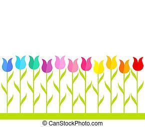 Tulip garden - Row of multicolor tulip flowers. Vector...