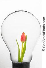 Tulip inside light bulb