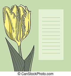 Tulip on a green background