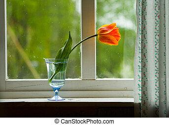 Tulip on window sill - Lonely orange tulip on a window sill