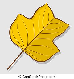 Tulip poplar autumn leaf isolated on a white