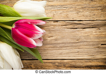 Tulip. - Tulips on a wooden surface. Studio photography.
