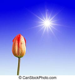 tulip under bright sun