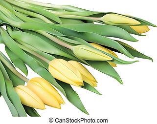 tulipa, flores, amarela
