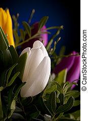 tulipa, flores, verde, coloridos, macro