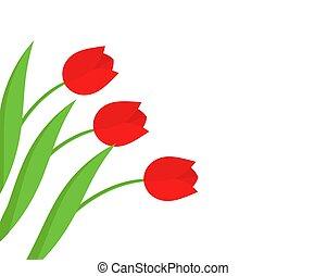 tulipa, flores, vermelho, experiência.