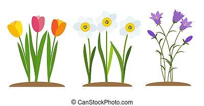 tulipa, vetorial, narcissus, fundo, flores mola, bluebell, ilustração