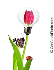 tulipan, lampa, bulwa