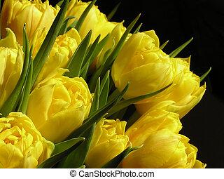 tulipanes, amarillo, ramo