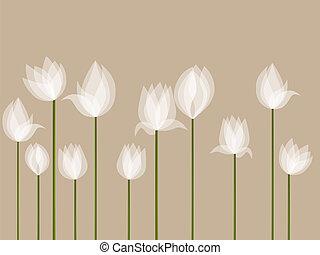 tulipanes, blanco