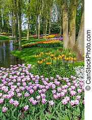 tulipanes, de, keukenhof, -, más grande, jardín, en, holanda